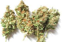 Odrůdy a modely / Nejznámější odrůdy a modely konopí https://www.semena-marihuany.cz/cs/blog/category/15-kmeny-modely-konopi