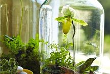 Plants decoration