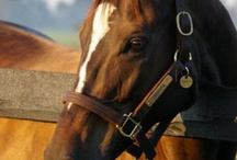 Favorite Racehorses / My Favorite Racehorses.  / by Terri Bey