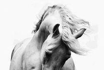 Horse quotes B&W