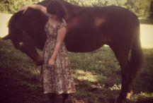 The Equestrian friend.