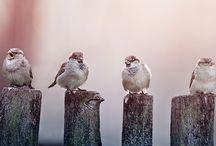 Let's Talk Birds Wild Birds / Wild Bird Pics - beautiful photos of wild birds from around the world