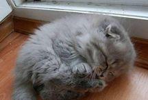 Cats/Pisicute, catei, animalute