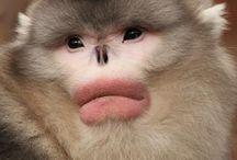 Nature::Monkey