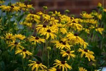 NATIVE PLANTS TO CONSIDER