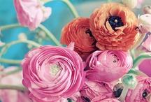 *C'est le bouquet*