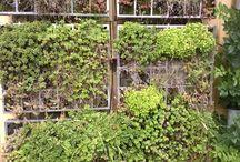 green walls / Grønne vægge