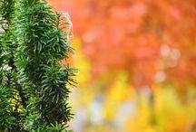 nature color palette autumn