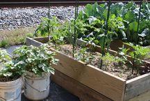 Gardening - Vegetables