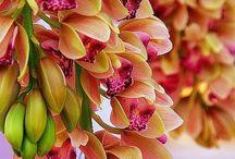 Marvellous Orchids