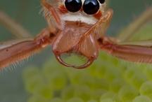 pająki i owady