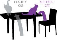 Super Seniors! / Senior pet health