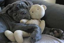 Puppiesssss