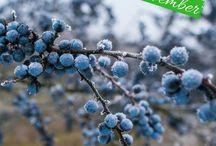 Wildkräuter-Kalender November / Wildpflanzen-Erntekalender für den Monat November