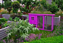 Chicken Architects  / Not your garden variety chicken coop.