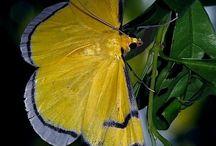 Animals Birds Butterflies etc 2
