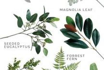 искуственные растения