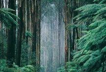 Nature / Природа