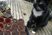 Cats helping in the Garden