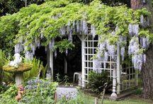 garden / by Maria Anaya