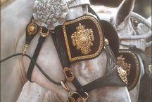 [ HORSES ] / by Ania Steshko