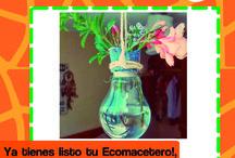 Macetero Ecológico / ¡Reutiliza tus ampolletas!