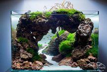 Akváriá