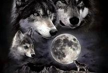 Idei tatuaje Wolf