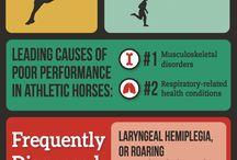 Horse Infographics