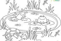 Preschool Theme: Pond
