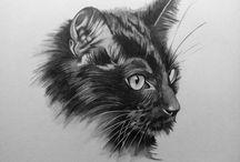 Cats / Poezen tekeningen