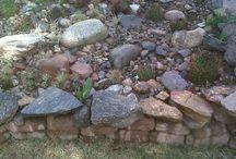 Los cactus de mi jardín