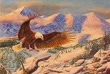 Bald Eagle Art / Fly like an Eagle! Get some great bald eagle art here!