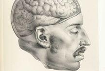 Anatomy / Illustrations