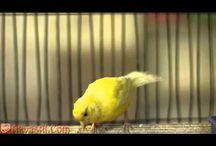 Do oglądania zwierzontek np. Ptaków