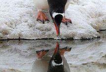 pingviiiiiin