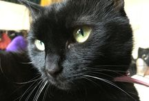 My cats / Ozzy, Dora, Kitt and Barney, aka the Kitty Committee.