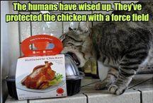 Cats' Stuff - Cosas de Gatos