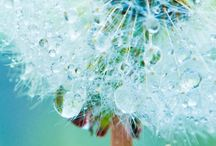 Nature/macro / Nature and Macro photography