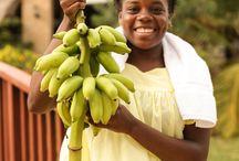 ↝ BELIZE ↜ / Wat kun je allemaal doen op je huwelijksreis in Belize?
