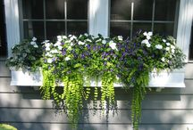 window boxes / by Kristen Armellino Roth