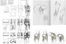 - Construction Anatomy - Hurman