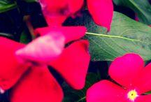 flower 花