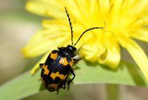 庭の生き物 / 自宅の庭の生き物いろいろ 調べたり、撮影したりの記録用
