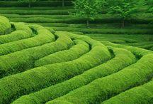 아름다운 녹색