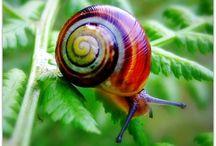 escargots tout beaux