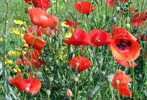 Côté fleurs et jardins / Tout sur les fleurs et jardins et sa décoration