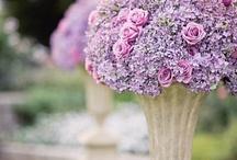 Sweet violet love