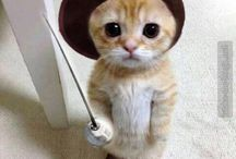 Katzen | Cats | Les chats / Nicht alle Engel haben Flügel, manche haben Schnurrhaare!  | Verfasser nicht bekannt