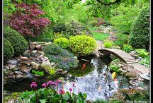 Fiskdam trädgård
